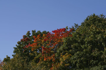carved green and bright red leaves in the sun