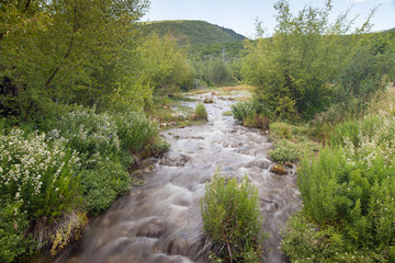 American Fork Canyon with view of soft flowing stream and vibrant green plants