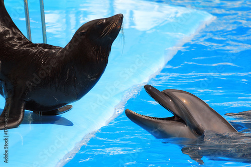 Dolphin and fur seal in a pool