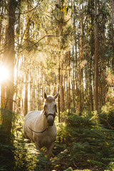 Tethered horse in woods