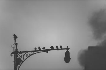 Birds on street lamp