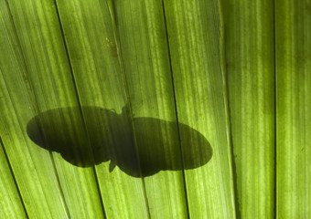 Butterfly Silhouette on a Tropical Plant