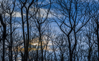 Branches forest silhouette
