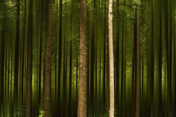 Teak wood environment