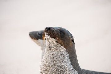 Two sea lions on beach