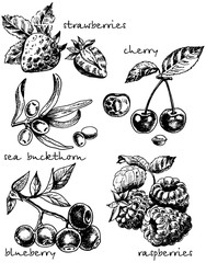 Vector ink hand drawn sketch style berries set