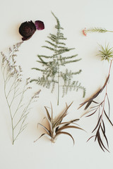 Fern, cotton, leaf, flower, air plant arrangement on white background
