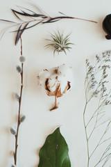 Fern, cotton, leaf, flower, air plant arrangement on white background