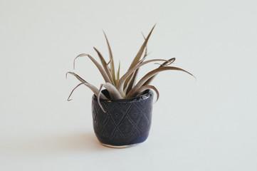 Handmade pottery succulent planter on white background