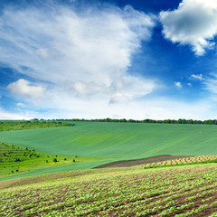 Wall Mural - Scenic landscape with a green spring field