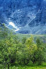 Beautiful mountain landscape, forest