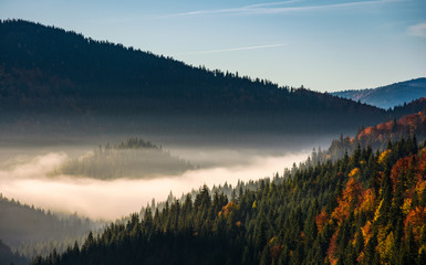 forest in valley at foggy sunrise. gorgeous mountain scenery in autumn