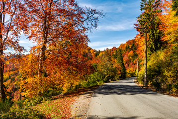 asphalt road through autumn forest in mountains. beautiful and colorful scenery on sunny day under the blue sky with some clouds