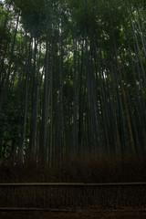 Bamboo forest inside the Arashiyama Bamboo Grove, Kyoto, Japan