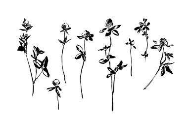 Set of hand drawn clover flowers. Sketch or doodle vector illustration of a weed field herbs. Black image on white background.
