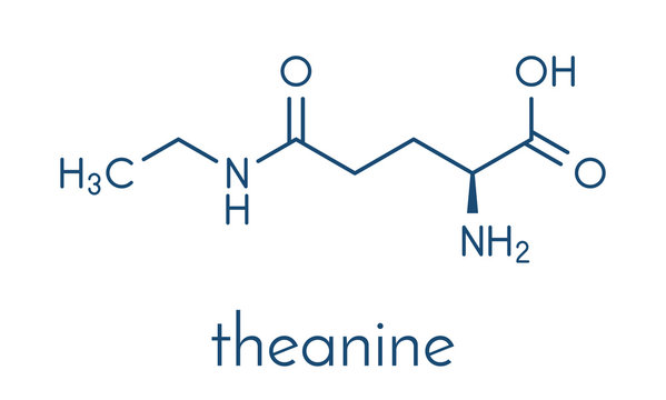 Theanine herbal molecule. Constituent of tea prepared from Camellia sinensis. Also taken as nutritional supplement. Skeletal formula.