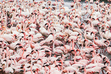 Group of flamingos on the sea. Texture - pattern
