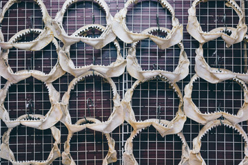Shark jaws displayed on a wall as souvenirs