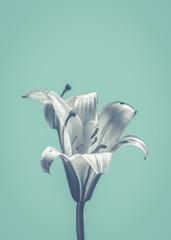 Flower On Blue Design