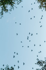 Black birds on blue sky
