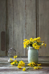 Daisies in kitchen jar and bird cage on table