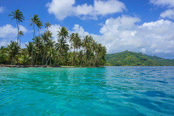 French Polynesia coastline coconut palm trees on the motu Vavaratea with Huahine island in background, Faie, south Pacific ocean, Oceania