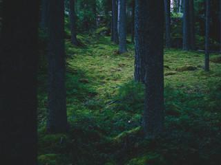 Magic woods in dark