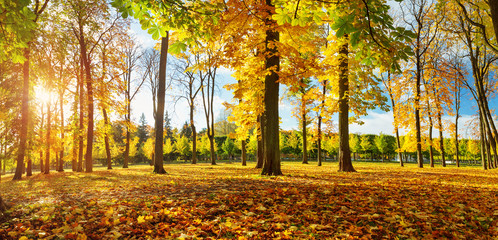 trees with multicolored leaves on the grass. Maple foliage in sunny autumn. Sunlight in early morning in forest. Kadriorg park in the capital of Estonia, Tallinn