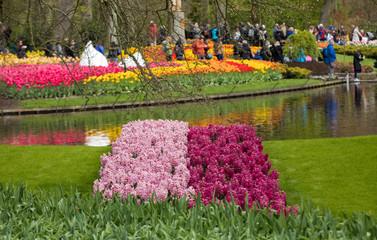 Colorful flowers in the Keukenhof Garden in Lisse, Holland, Netherlands.