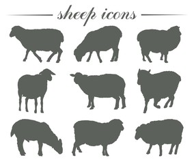 animal husbandry. breeding of sheep. set of vector silhouettes on white