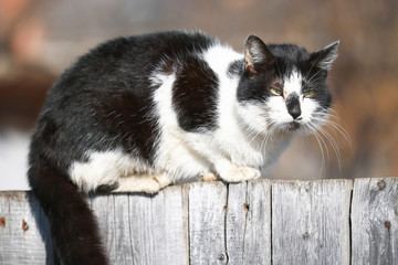 Funny cats sit on the fence