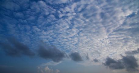 Cottony Cloud....!!!!