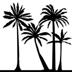 palm, tropical, leaf, illustration