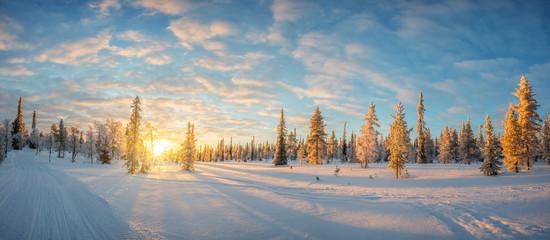 Snowy landscape at sunset, frozen trees in winter in Saariselka, Lapland, Finland Wall mural