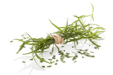 Estragon. Artemisia dracunculus