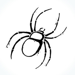 Hand drawn contour picture of spider silhouette isolated on white background. Template for Halloween design. Vector illustration.