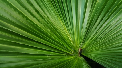 Abstract image of Green Palm leaves in nature