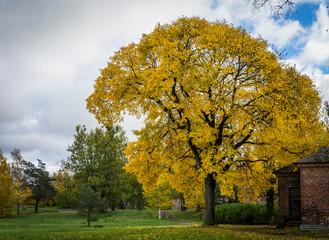 Autumn fall foliage in park