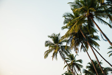 Palm trees and sky on tropical setting with copyspace