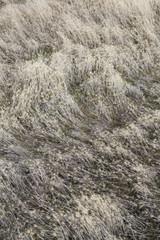 Windswept wild grasses in meadow
