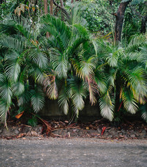 Palm tree leaves on the side of the road