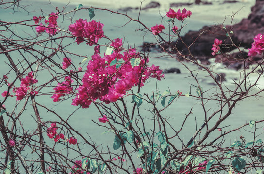 Vibrant pink/purple flowers bloom against the seaside background; abstract floral background/texture
