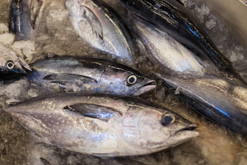 Skipjack Tuna ready to be sold in fish market.;