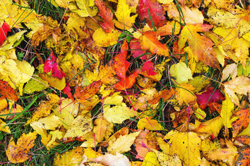 Colorful fall leaves on the grass, autumn background, top view