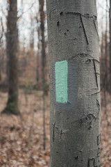 Painted trail marker on tree in forest