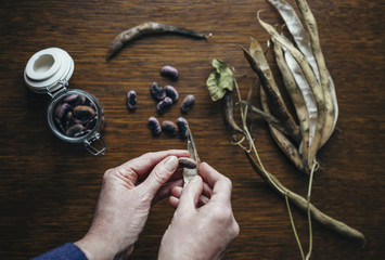 Removing seeds from Runner Bean pods, to store for sowing the following season.