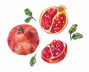 set of watercolor pomegranates. A whole fruit and in a cut. Drawing isolated on white