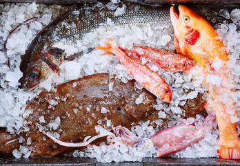 Variety of fish on ice
