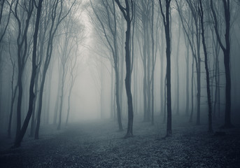 dark fantasy forest halloween background
