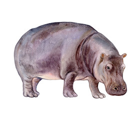 Hippopotamus baby isolated on white background. Нippo. Watercolor. Illustration. Template Clip art.
